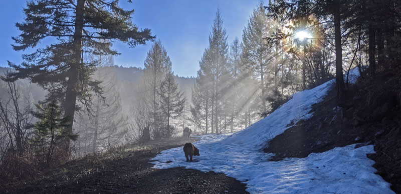 sun, trees, dogs, snow