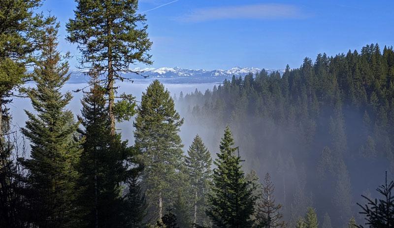 trees, fog, mountains