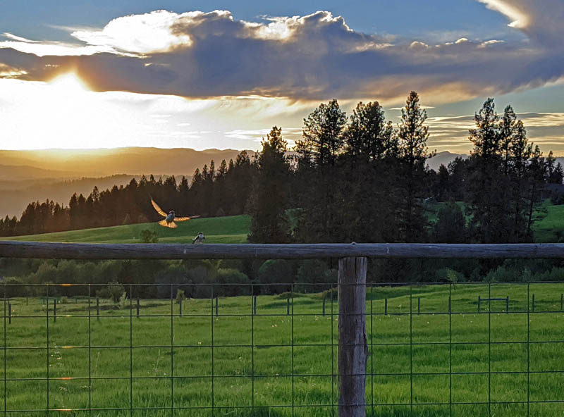 birds, fence