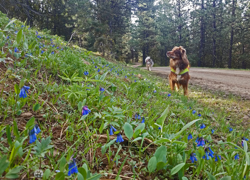 wildflowers, dog, road