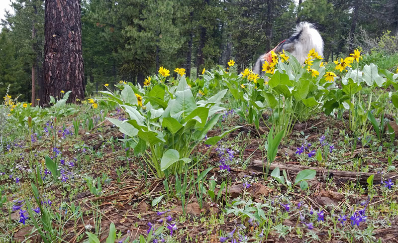 wildflowers, trees, dog