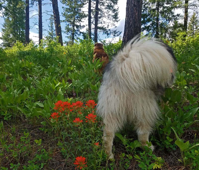 dogs, wildflowers, trees, sky