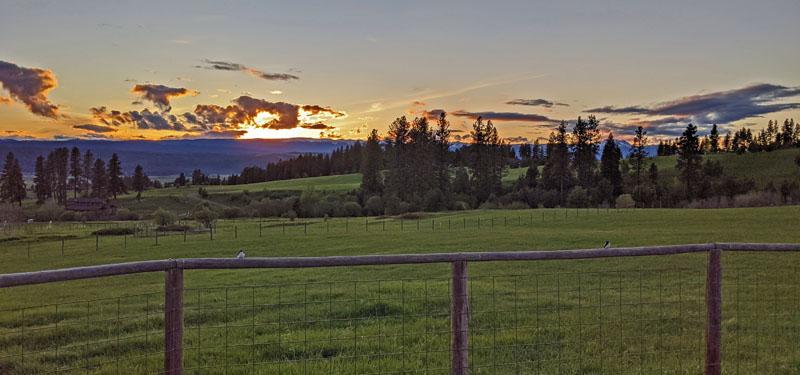 sunset, birds, fence