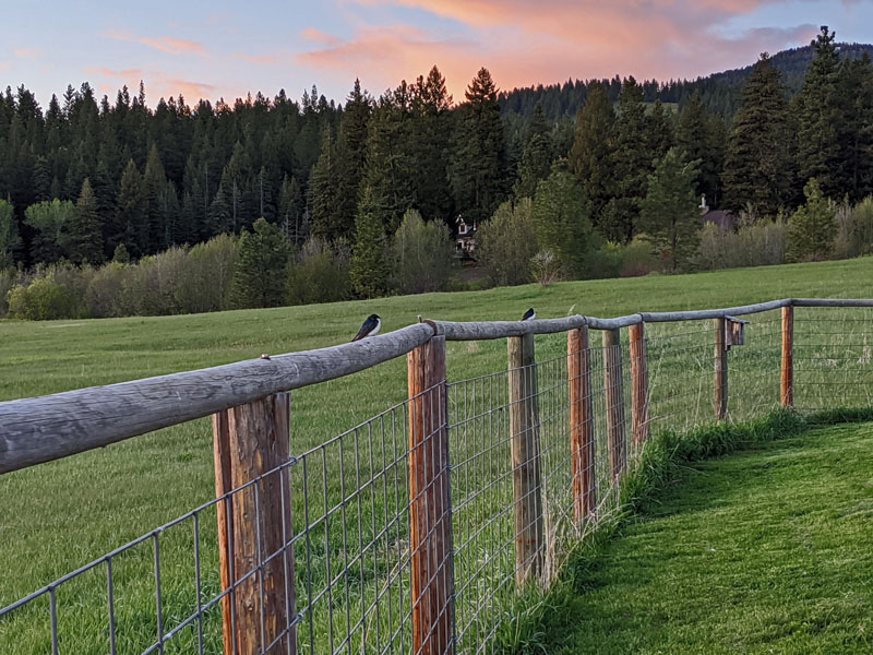two birds on fence rail
