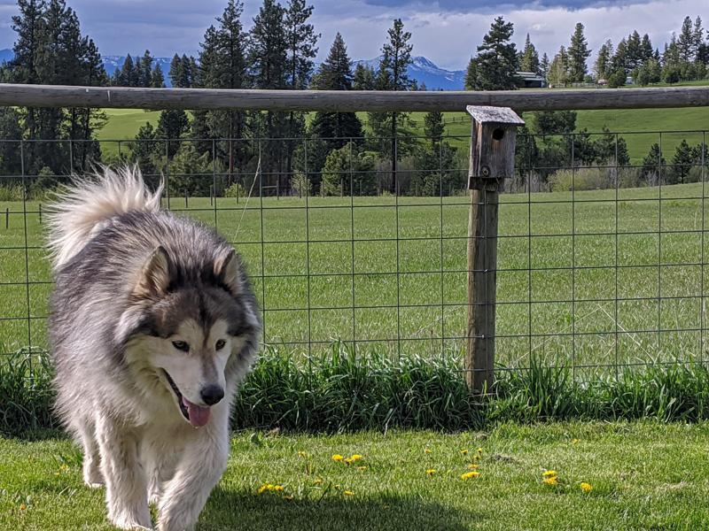 dog, fence, nesting box