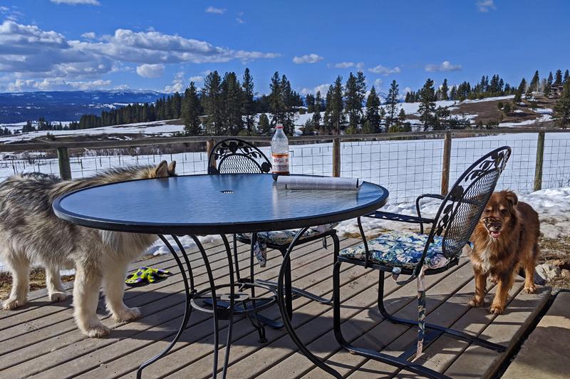 deck, dogs, snow