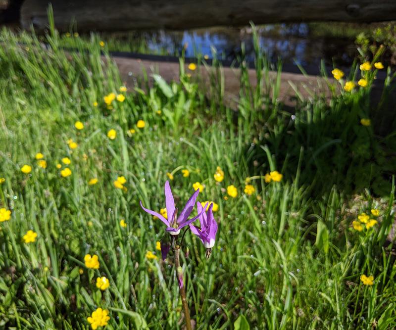 wildflowers, fence, stream