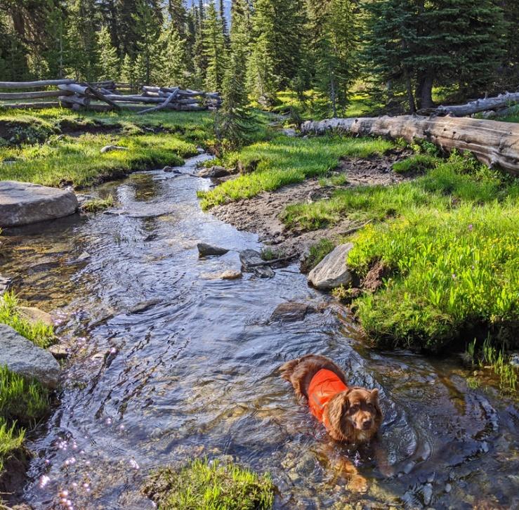 dog, stream, fence, trees