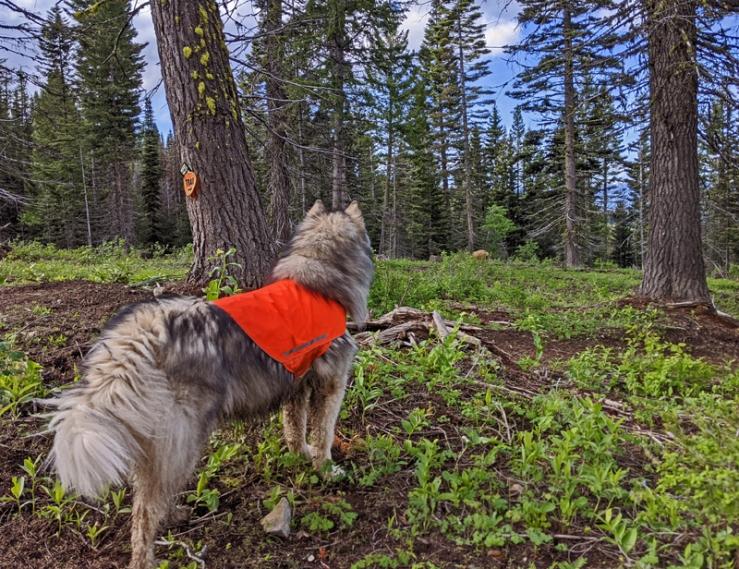 dog, trees, deer