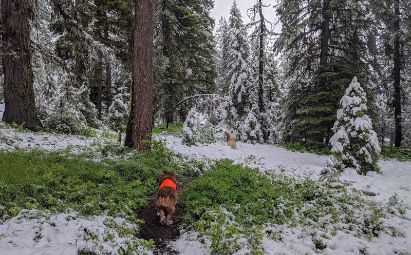trees, snow, dogs