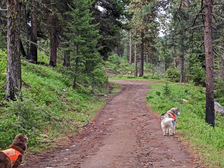 trees, dogs, elk