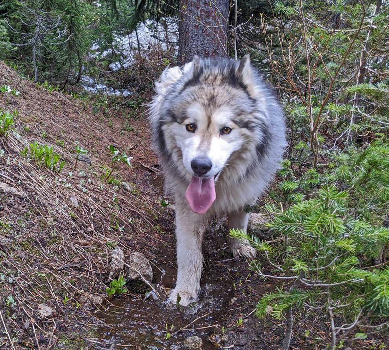 dog, trillium