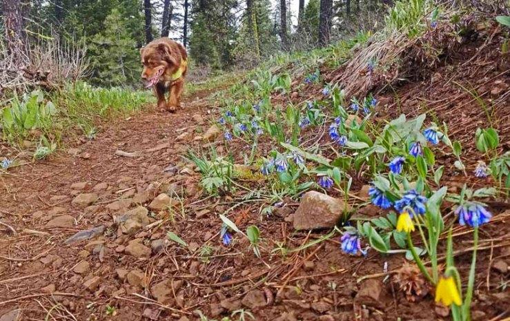 trail, wildflowers, dog