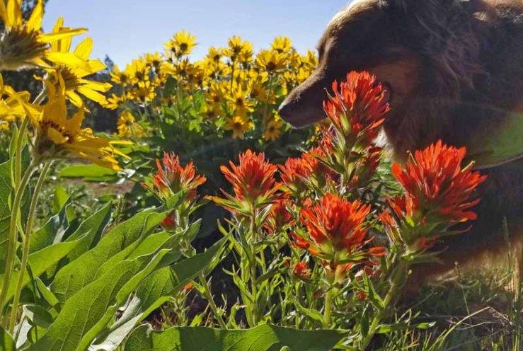 dog, wildflowers