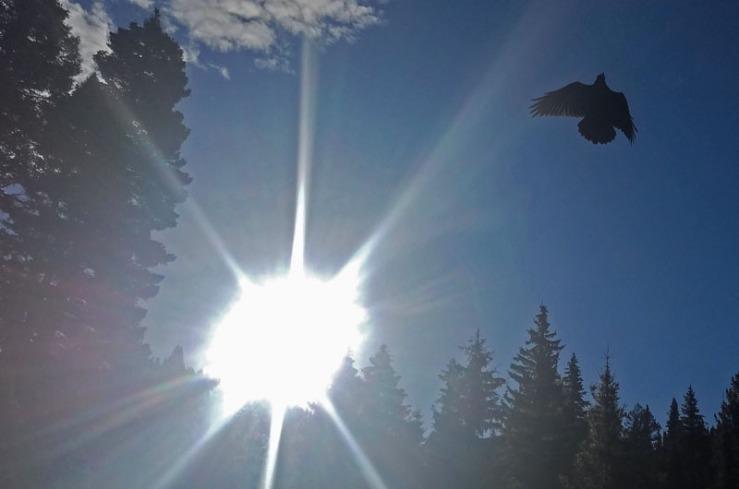 raven, sun, sky