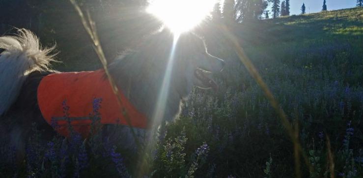 dog, sun