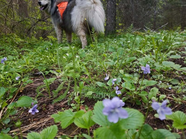 wildflowers, dog