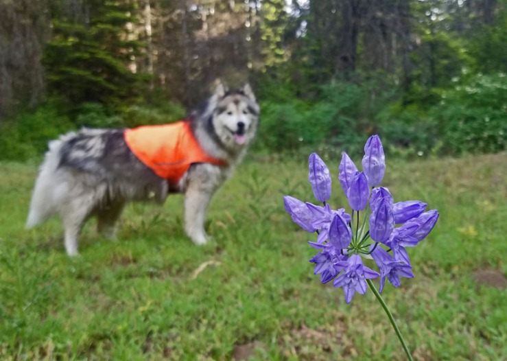 wildflower, dog