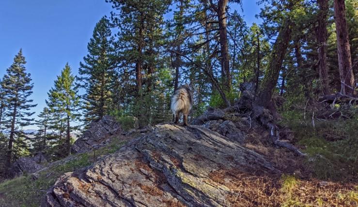 dog, boulder, trees