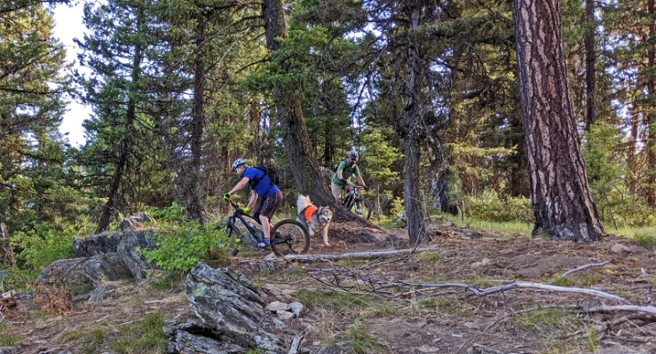 forest, mountain bikers, dog