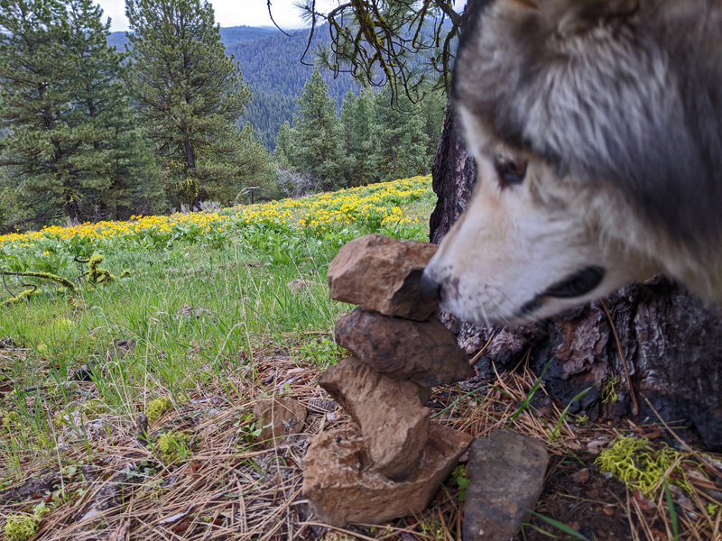 cairn, dog, wildflowers