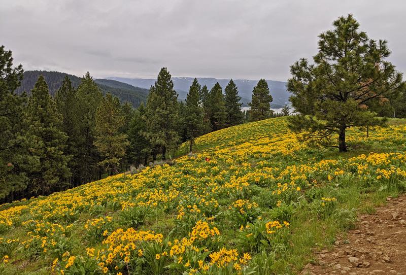 wildflowers, trees