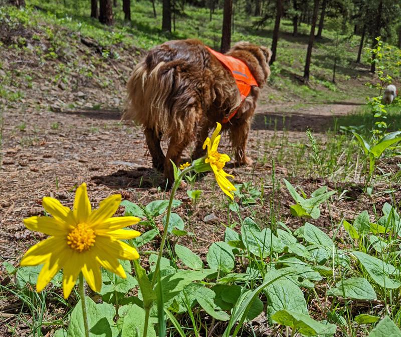 wildflowers, dogs