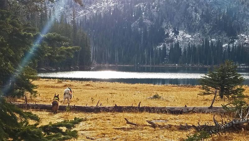 dogs, lake