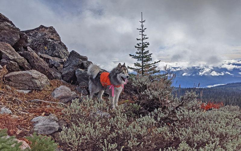 dog, mountain