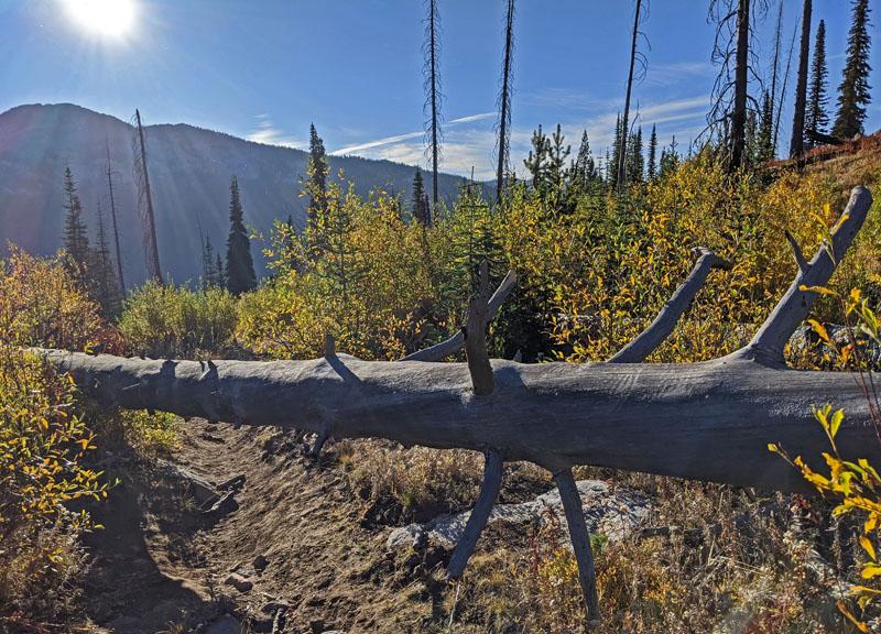 dead tree across trail