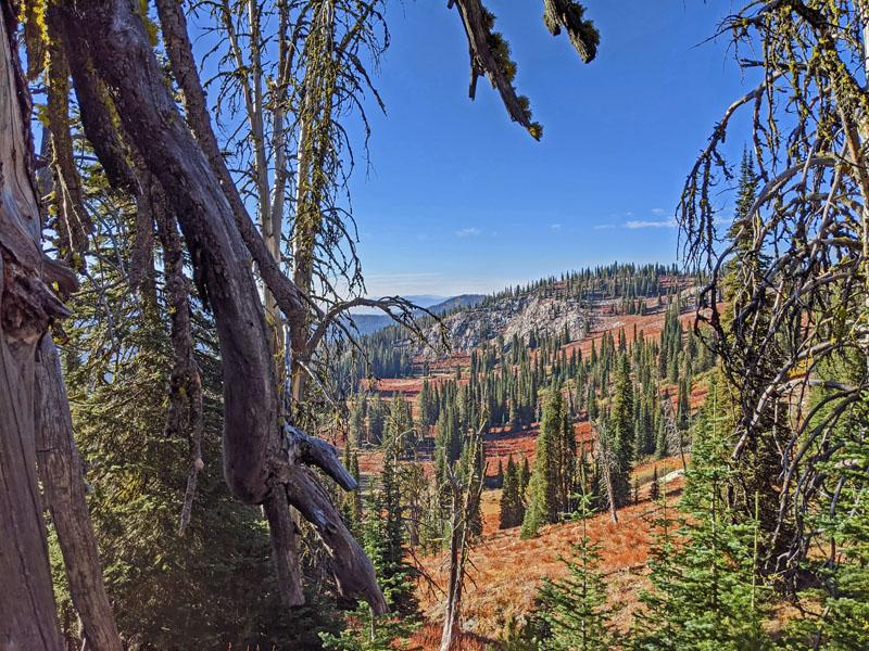 trees, mountain