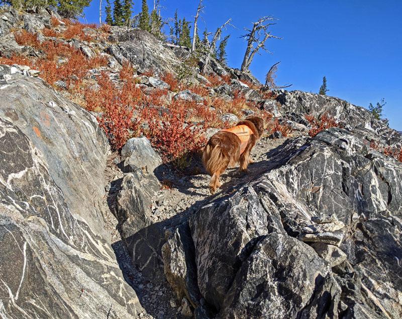 dog, granite with quartz veins