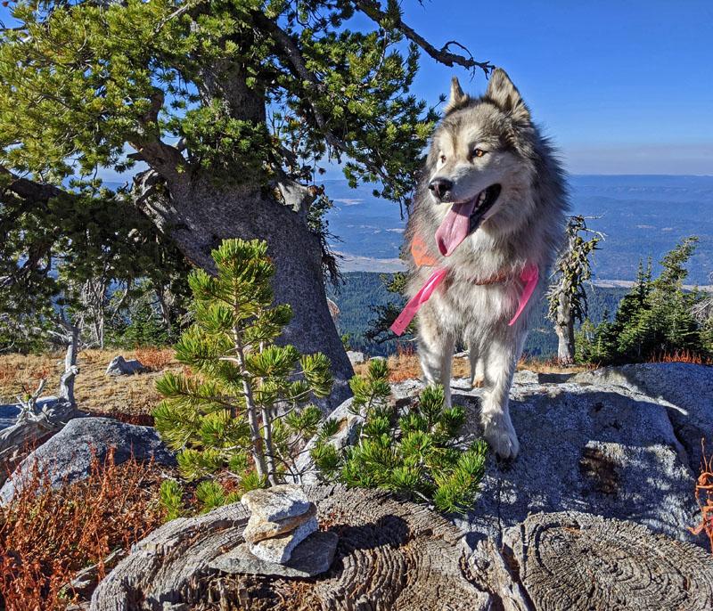 dog, trees