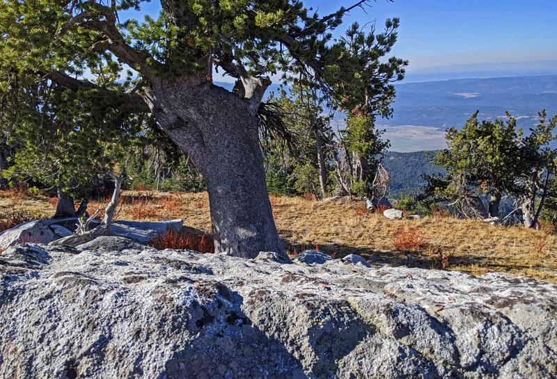 tree, boulder, view