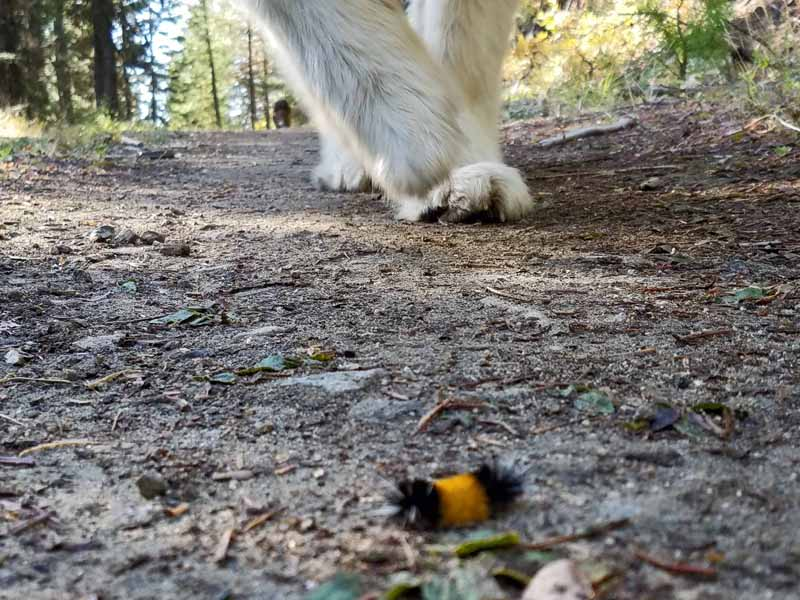 dog feet, woolly bear caterpillar