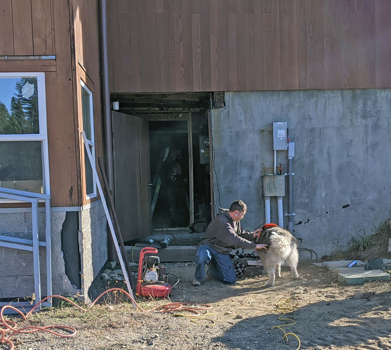 dog and worker