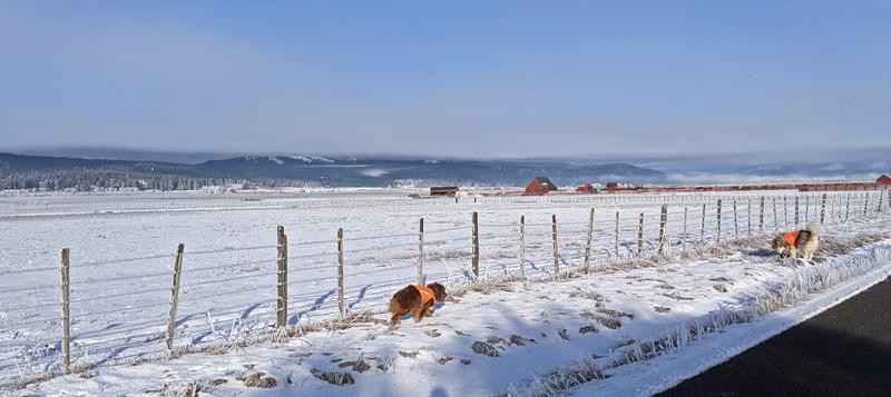 dogs, pasture, snow