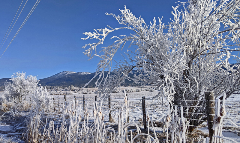 frosty tree, fence, mountain
