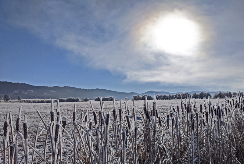 sun through fog, cattails