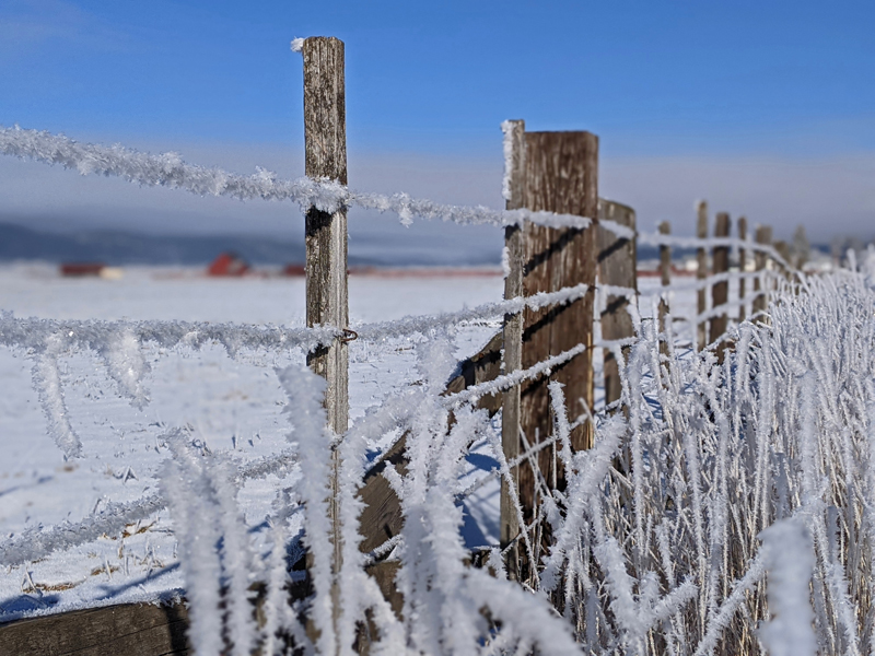 fence covered in frost