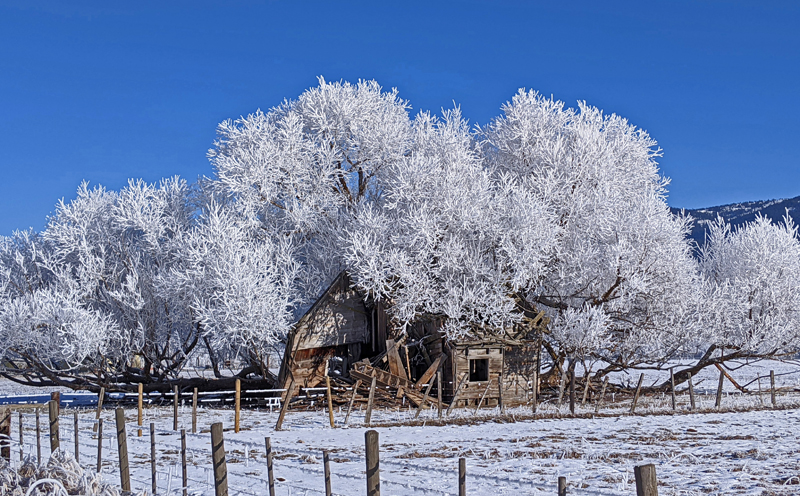 old house, frosty trees