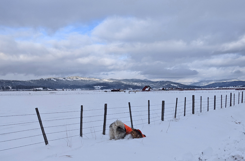 dogs, snow, mountains