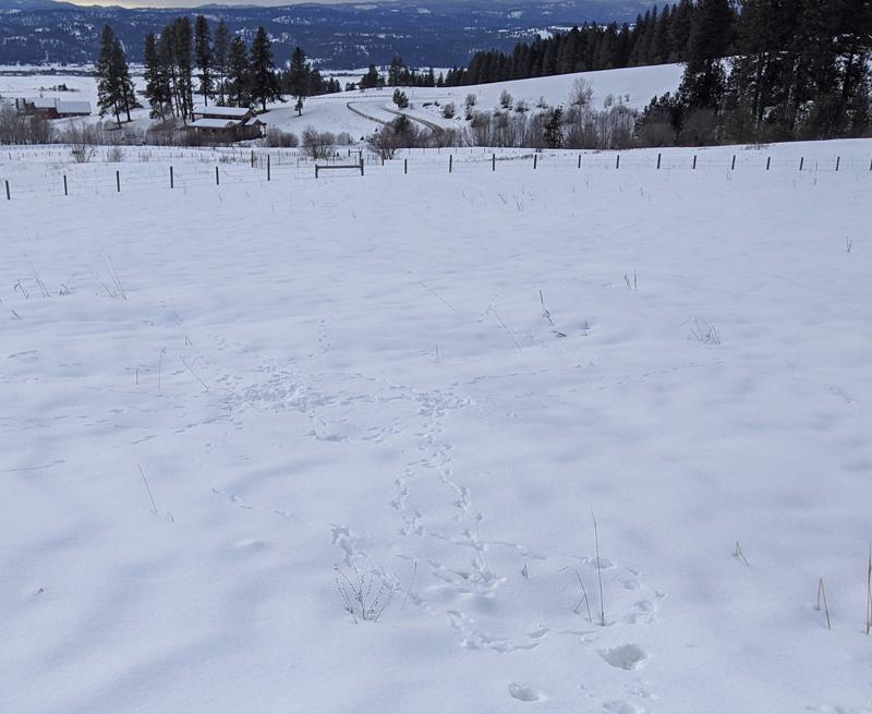 tracks in snowy field