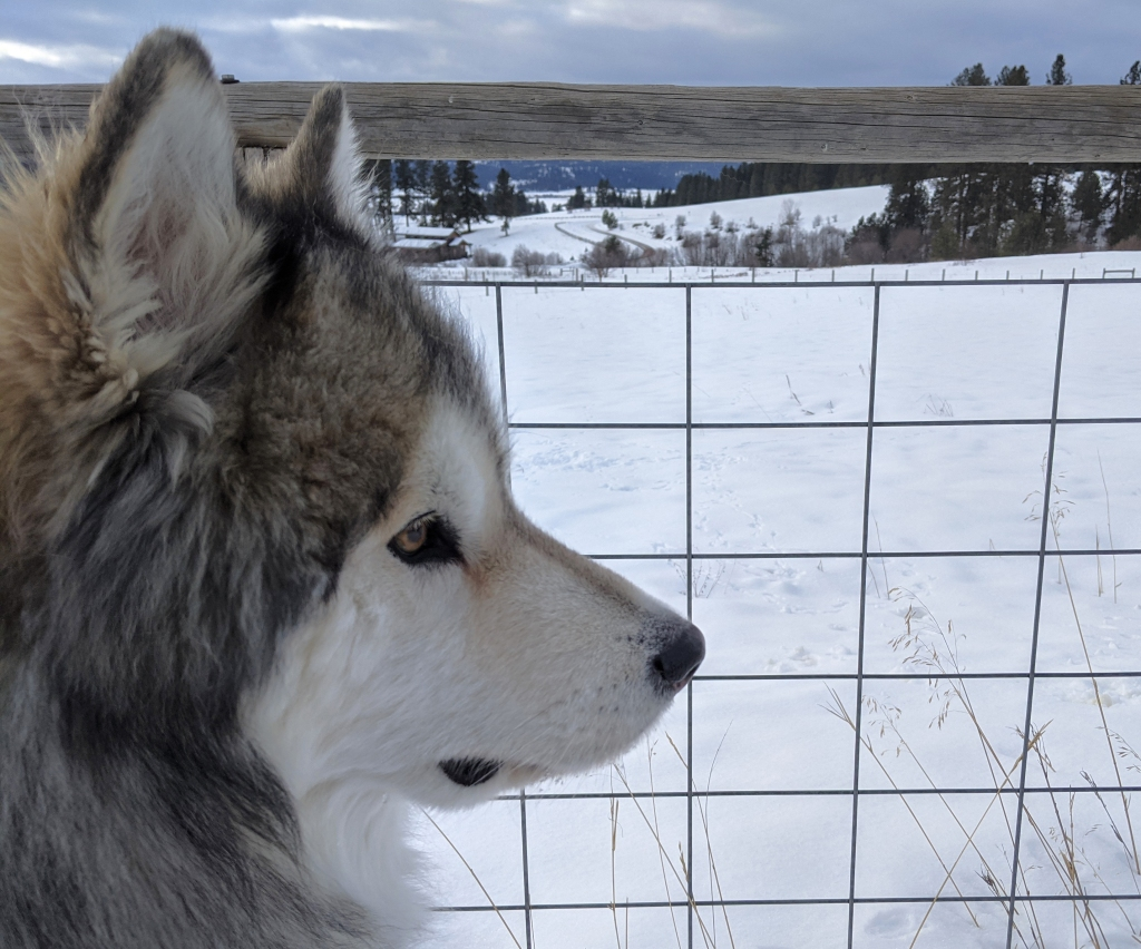 dog, field