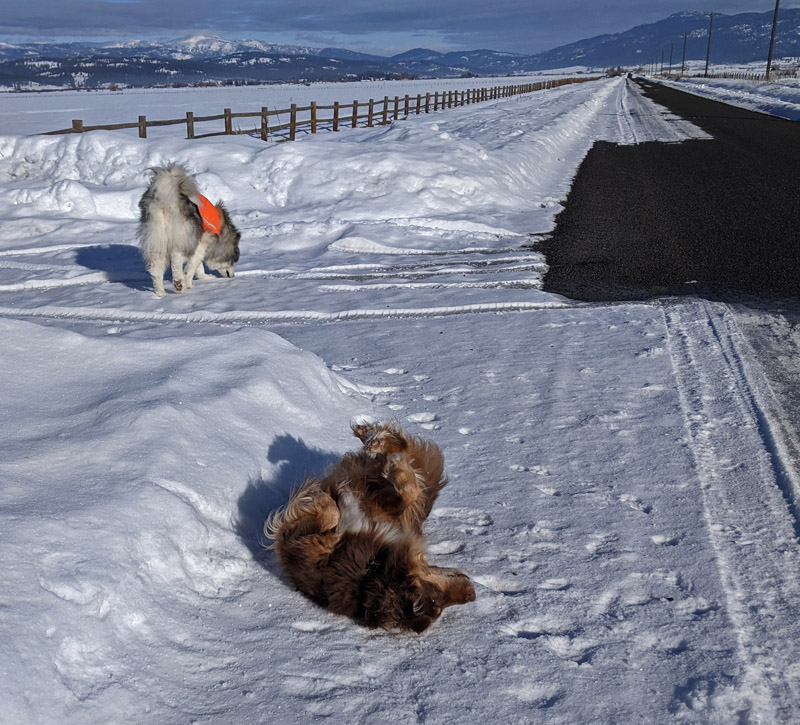 dogs on snowy road
