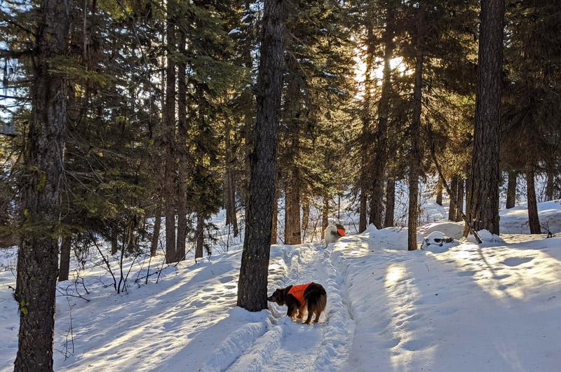 trees, snow, dogs