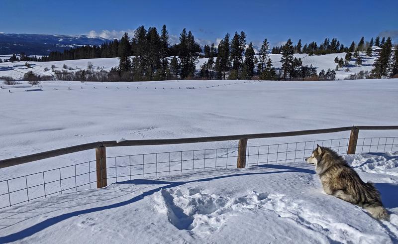 dog, fence, snow