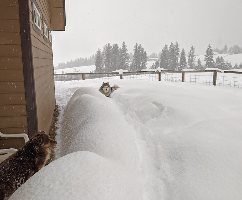 dogs, snow, house