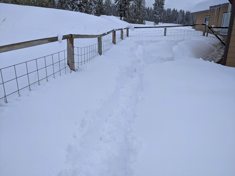 snowy yard with packed path