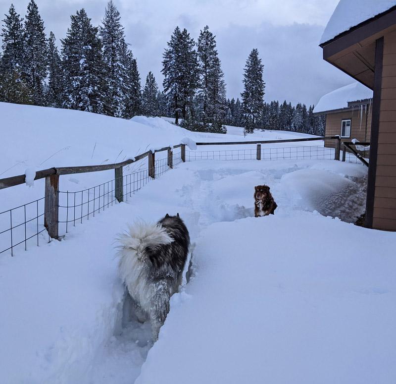 dogs in snowy yard
